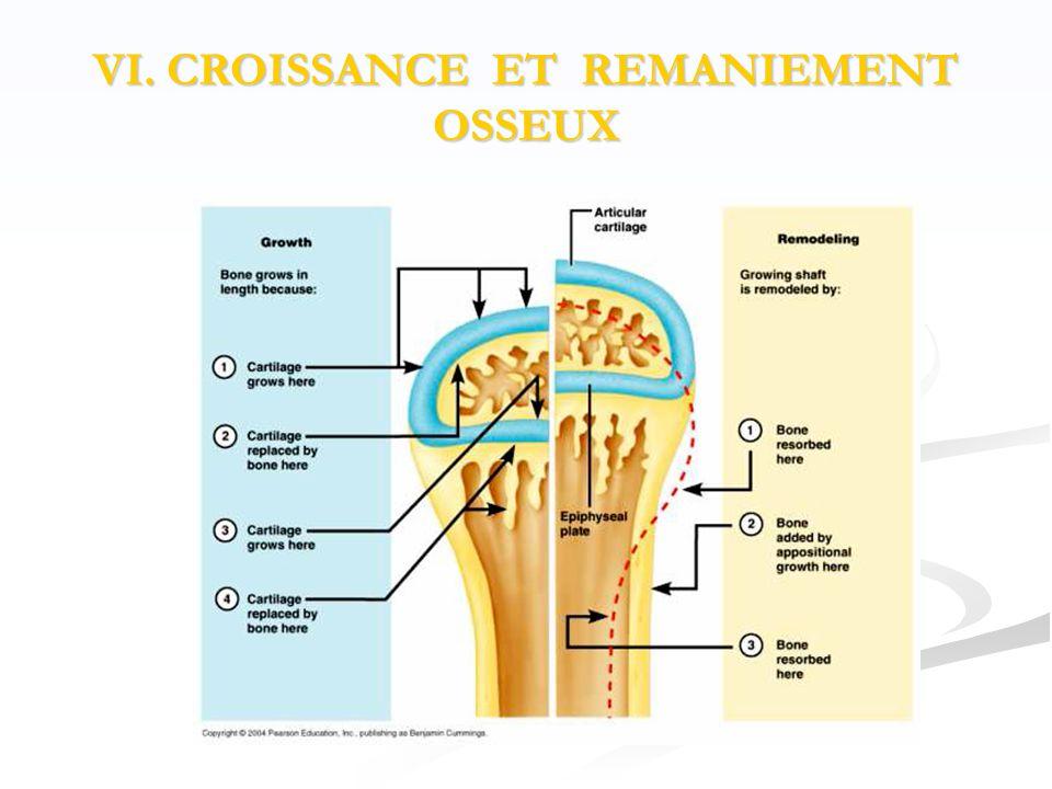 VI. CROISSANCE ET REMANIEMENT OSSEUX