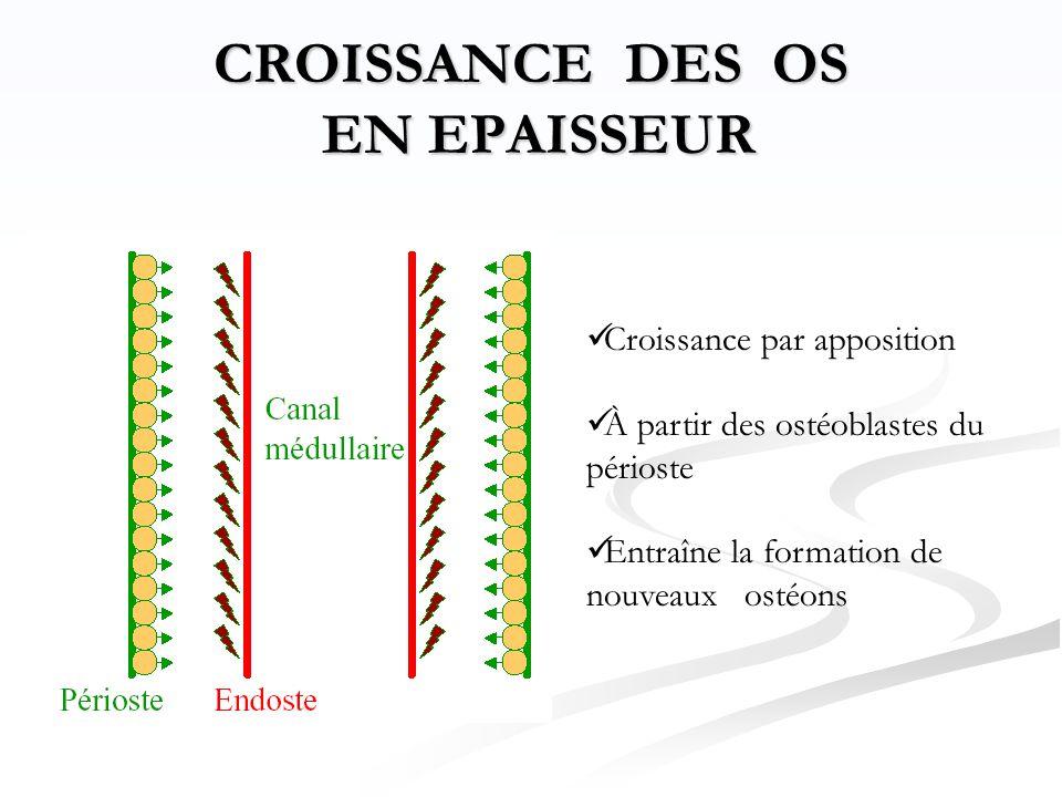 CROISSANCE DES OS EN EPAISSEUR