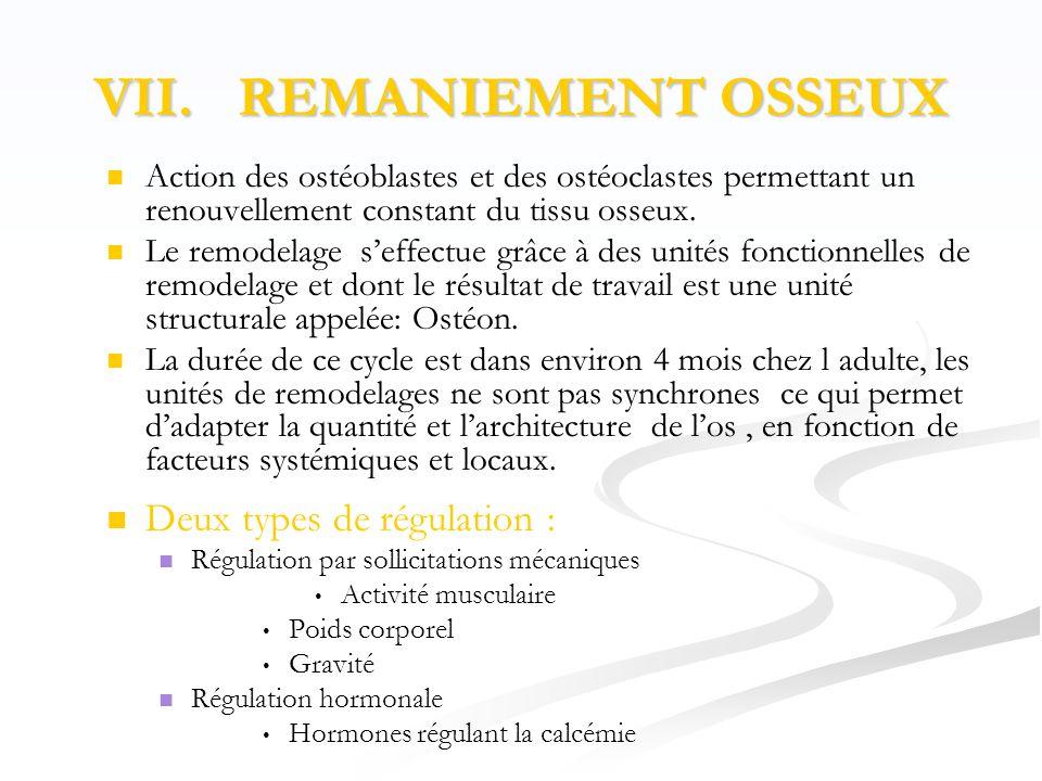 VII. REMANIEMENT OSSEUX