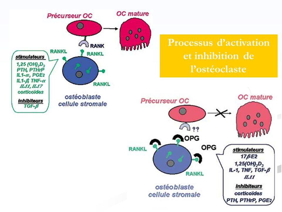 Processus d'activation et inhibition de l'ostéoclaste