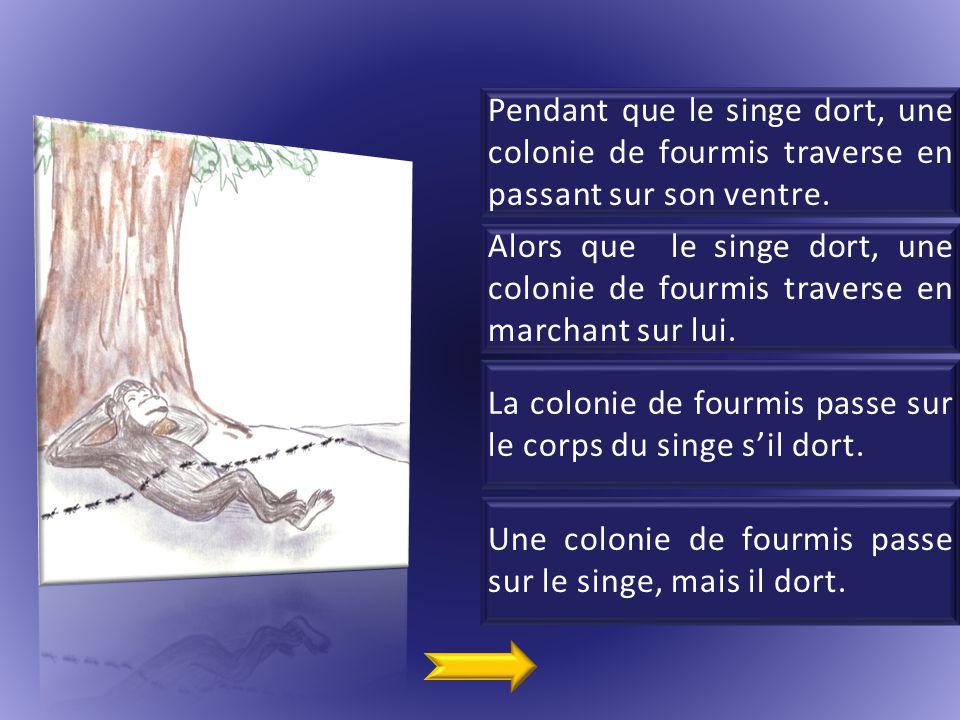 Pendant que le singe dort, une colonie de fourmis traverse en passant sur son ventre.