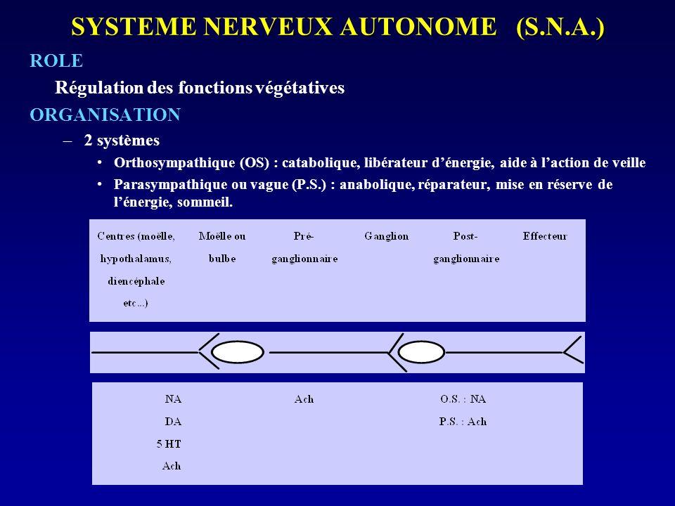 SYSTEME NERVEUX AUTONOME (S.N.A.)