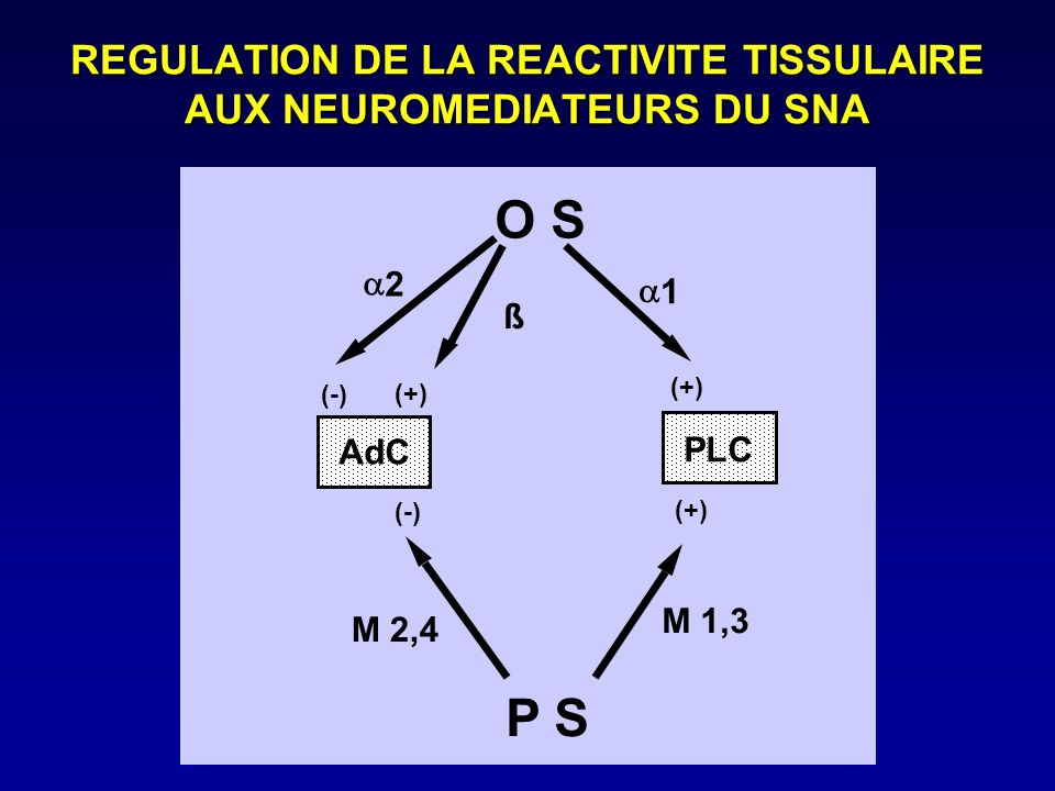 REGULATION DE LA REACTIVITE TISSULAIRE AUX NEUROMEDIATEURS DU SNA