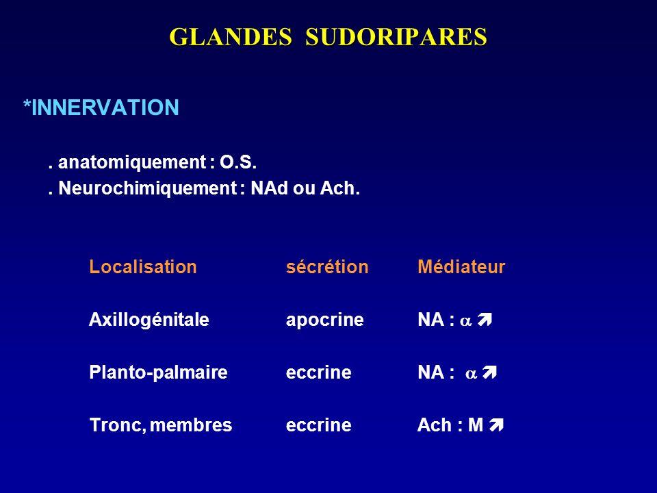 GLANDES SUDORIPARES *INNERVATION . anatomiquement : O.S.