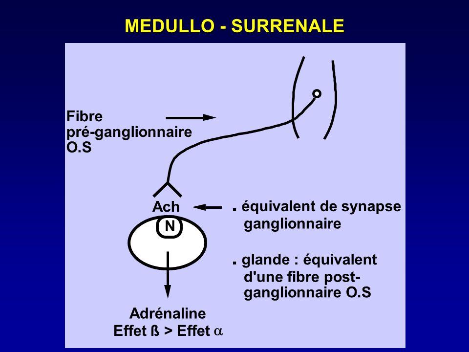 . MEDULLO - SURRENALE Fibre pré-ganglionnaire O.S Ach