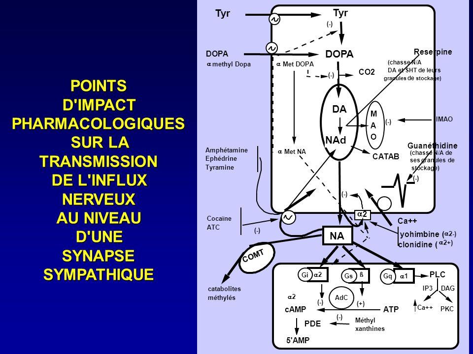 POINTS D IMPACT PHARMACOLOGIQUES SUR LA TRANSMISSION DE L INFLUX
