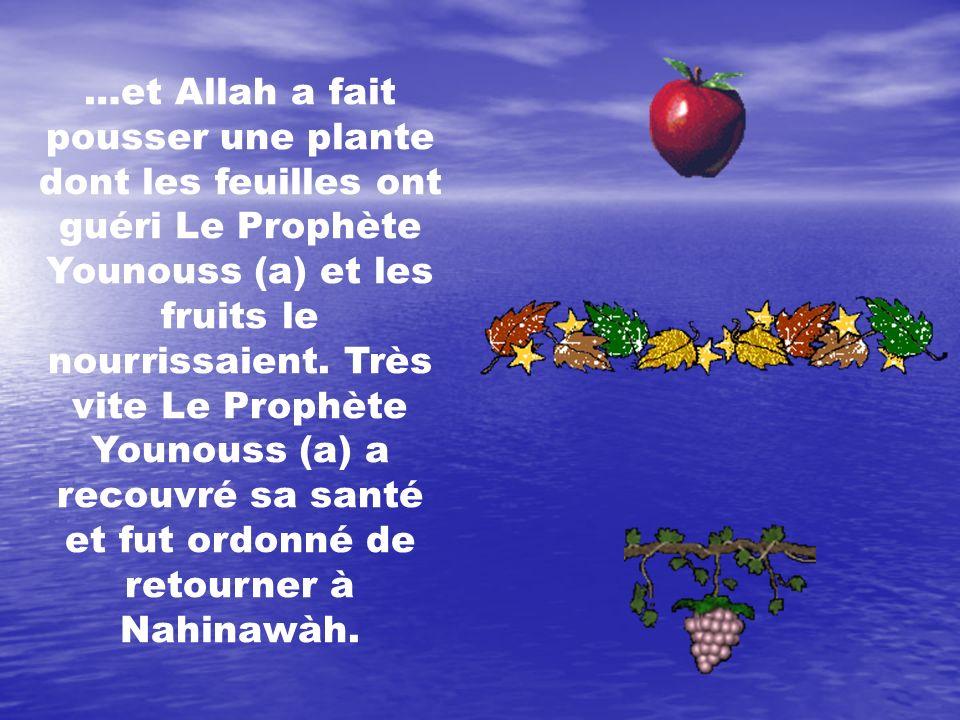 …et Allah a fait pousser une plante dont les feuilles ont guéri Le Prophète Younouss (a) et les fruits le nourrissaient. Très vite Le Prophète Younouss (a) a recouvré sa santé et fut ordonné de retourner à Nahinawàh.