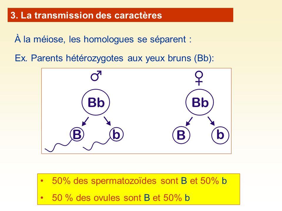 3. La transmission des caractères