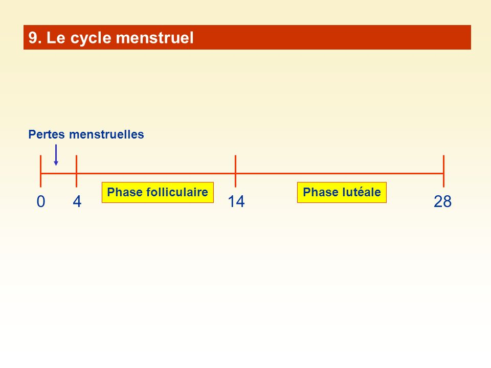 9. Le cycle menstruel 4 14 28 Pertes menstruelles Phase folliculaire