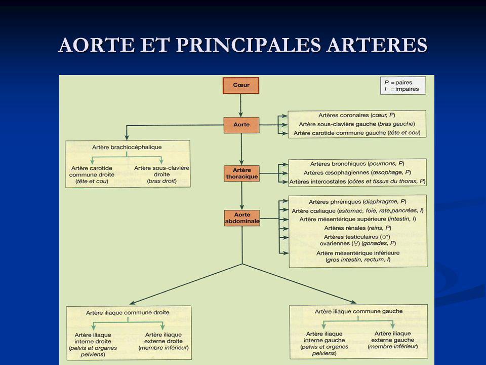 AORTE ET PRINCIPALES ARTERES