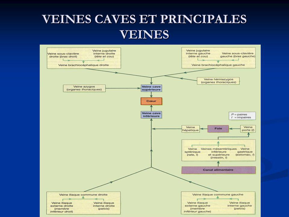 VEINES CAVES ET PRINCIPALES VEINES