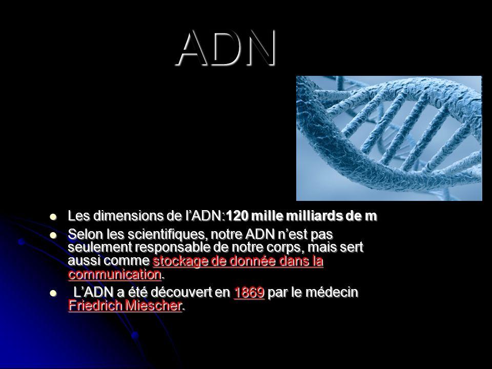 ADN Les dimensions de l'ADN:120 mille milliards de m