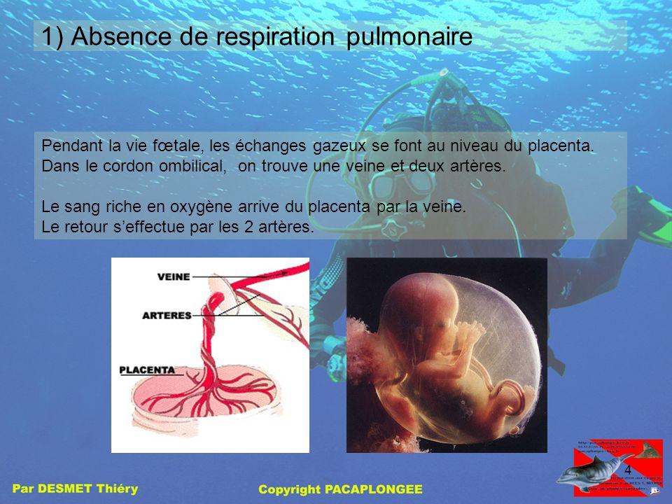 1) Absence de respiration pulmonaire
