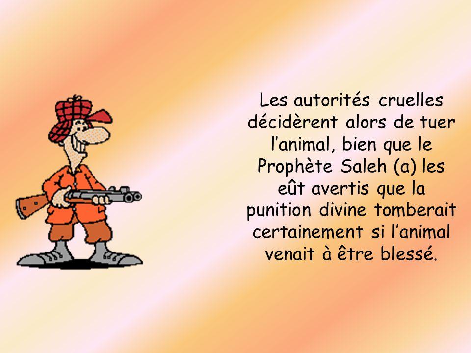Les autorités cruelles décidèrent alors de tuer l'animal, bien que le Prophète Saleh (a) les eût avertis que la punition divine tomberait certainement si l'animal venait à être blessé.