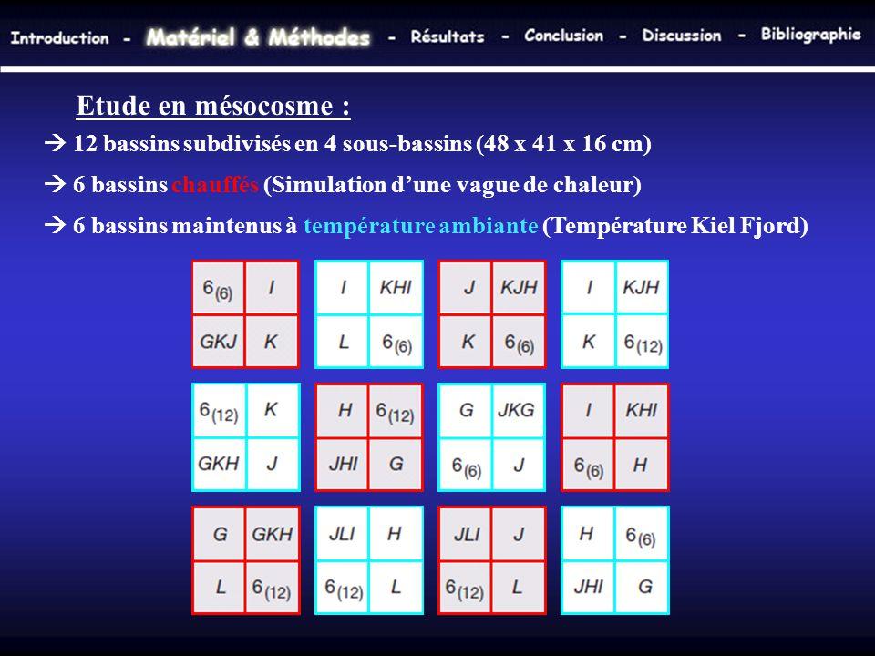 Etude en mésocosme :  12 bassins subdivisés en 4 sous-bassins (48 x 41 x 16 cm)  6 bassins chauffés (Simulation d'une vague de chaleur)