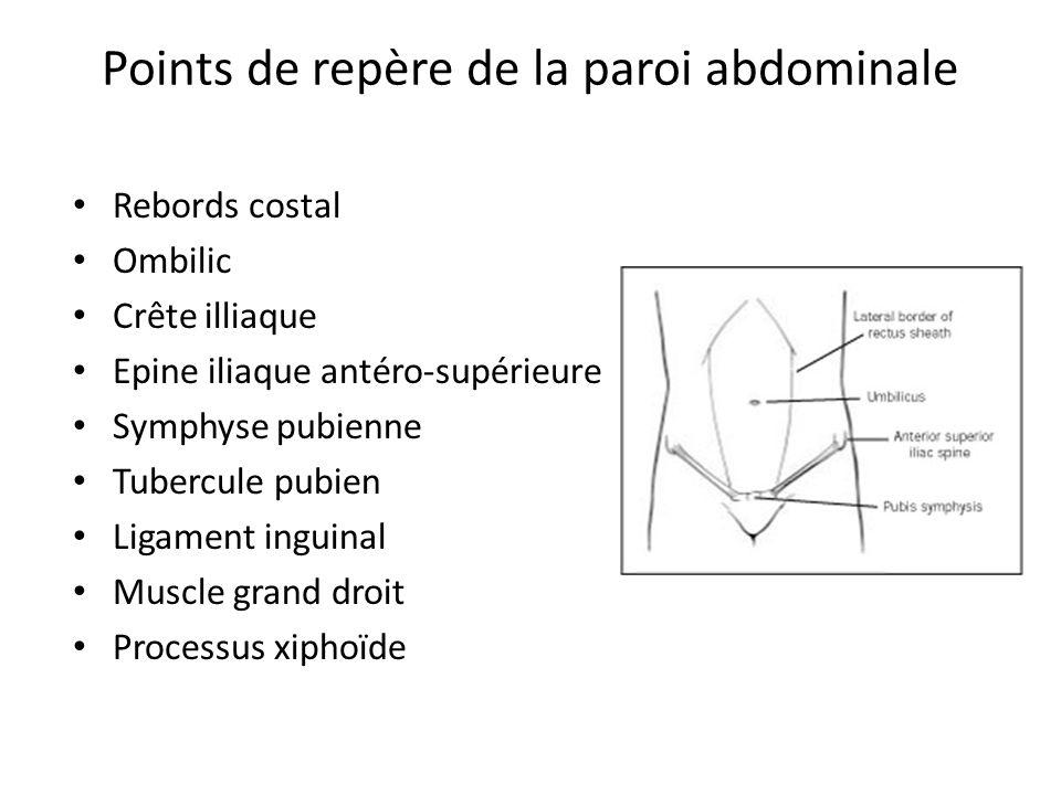 Points de repère de la paroi abdominale