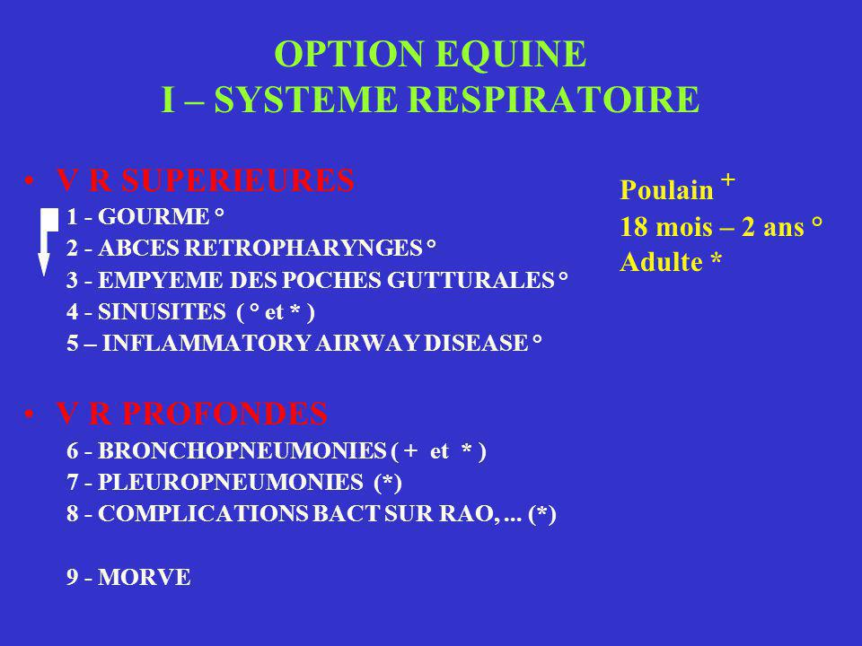 OPTION EQUINE I – SYSTEME RESPIRATOIRE