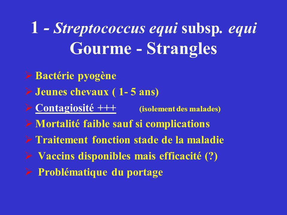 1 - Streptococcus equi subsp. equi Gourme - Strangles