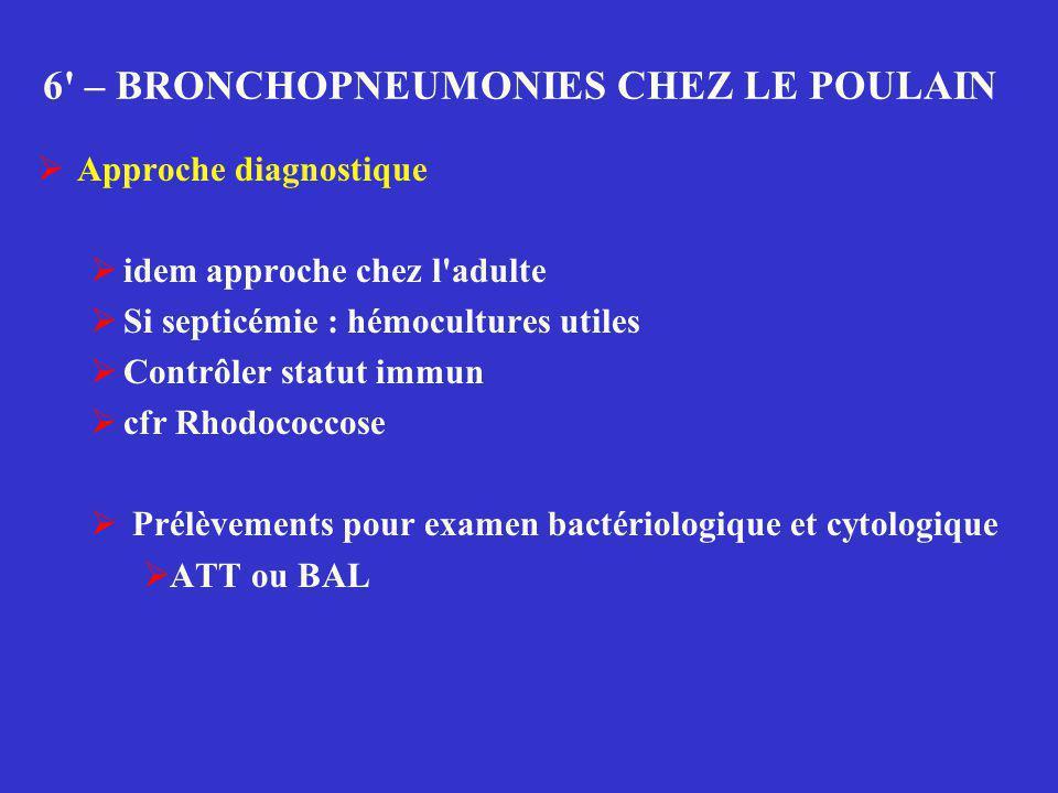 6 – BRONCHOPNEUMONIES CHEZ LE POULAIN