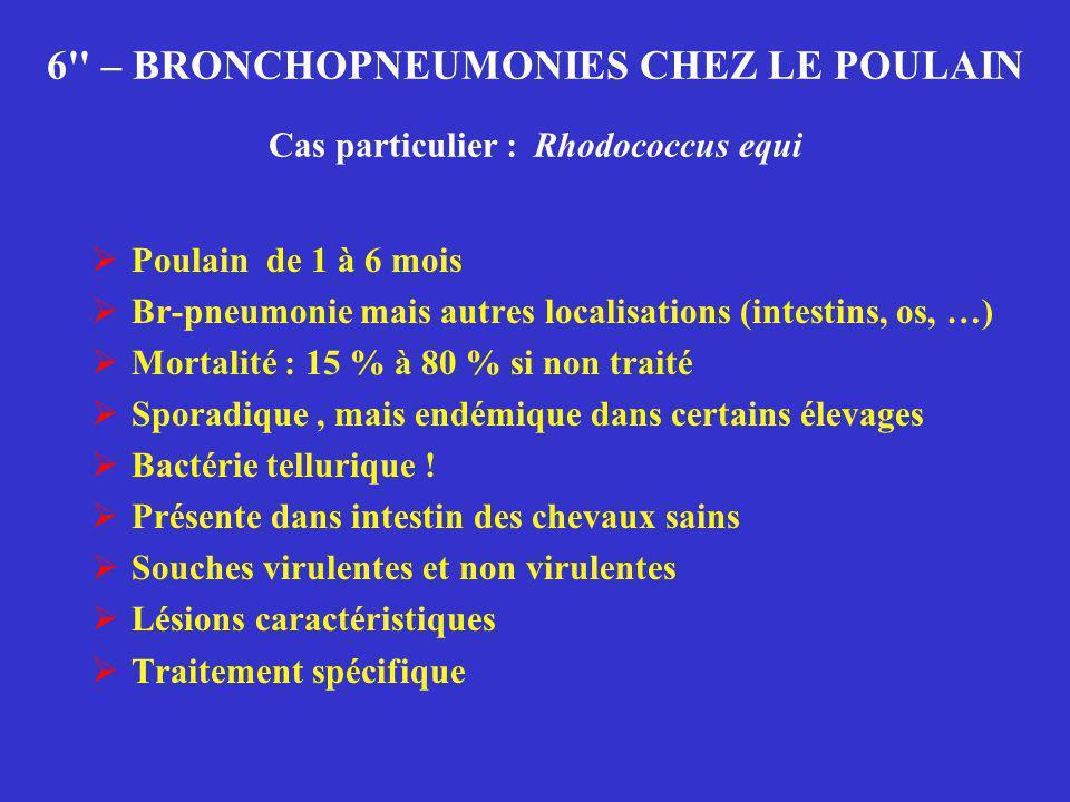 6 – BRONCHOPNEUMONIES CHEZ LE POULAIN Cas particulier : Rhodococcus equi