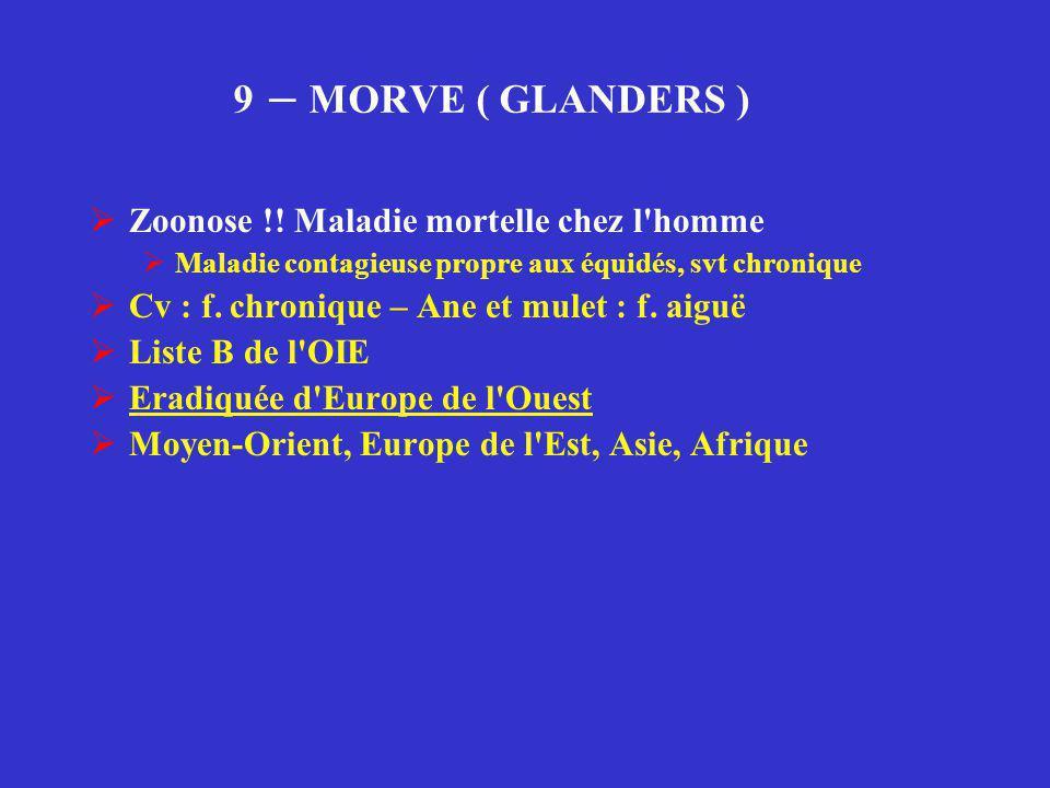 9 – MORVE ( GLANDERS ) Zoonose !! Maladie mortelle chez l homme