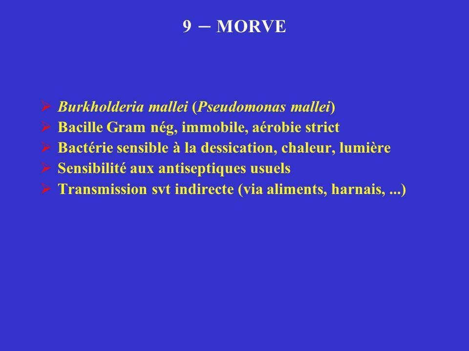 9 – MORVE Burkholderia mallei (Pseudomonas mallei)