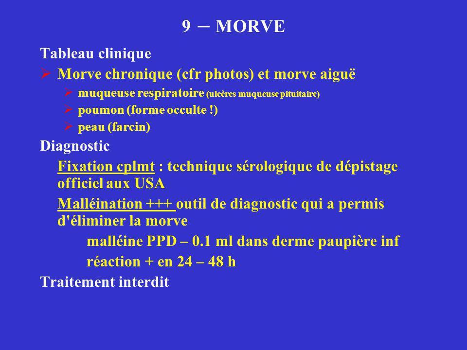 9 – MORVE Tableau clinique Morve chronique (cfr photos) et morve aiguë