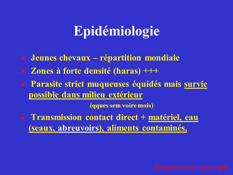Epidémiologie Jeunes chevaux – répartition mondiale