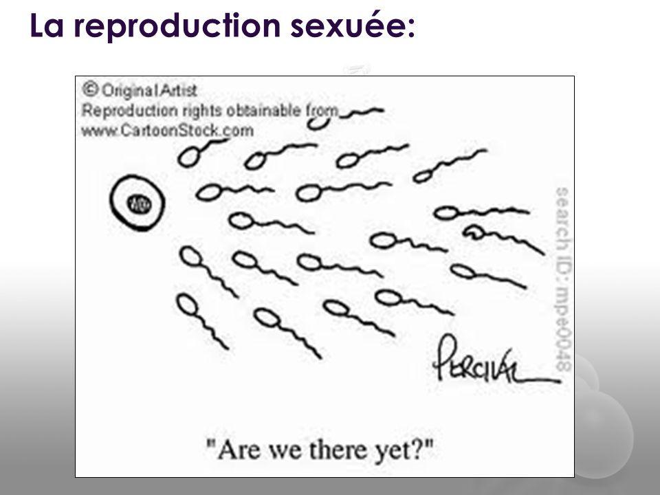La reproduction sexuée: