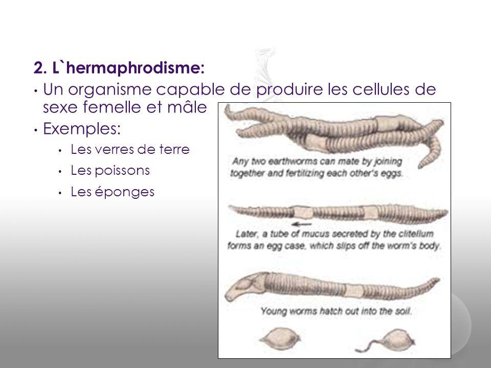 Un organisme capable de produire les cellules de sexe femelle et mâle