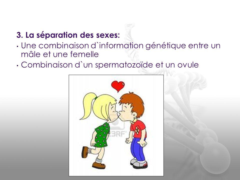 3. La séparation des sexes: