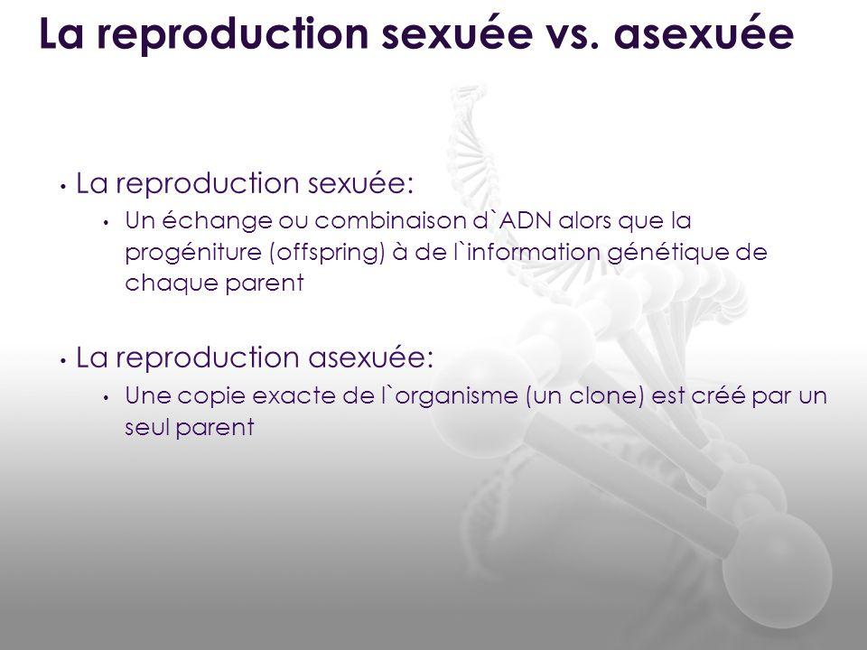 La reproduction sexuée vs. asexuée
