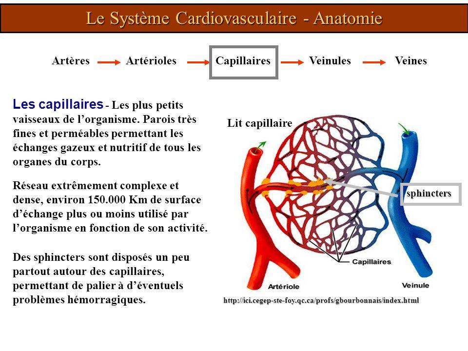 Le Système Cardiovasculaire - Anatomie