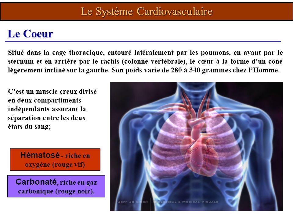 Le Système Cardiovasculaire