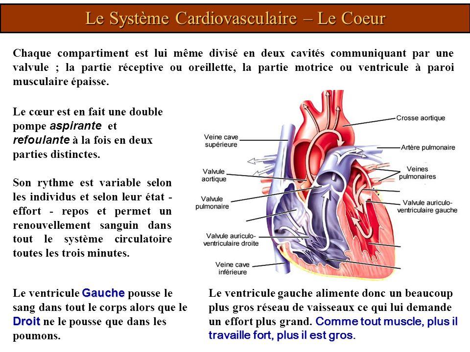 Le Système Cardiovasculaire – Le Coeur