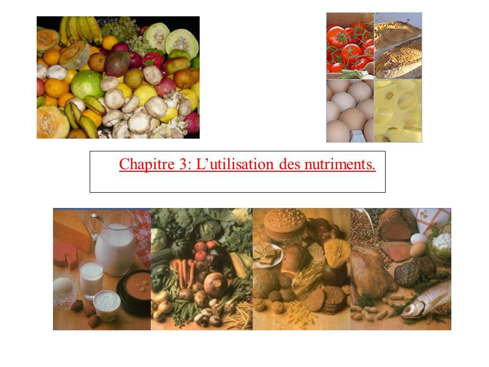 Chapitre 3: L'utilisation des nutriments.