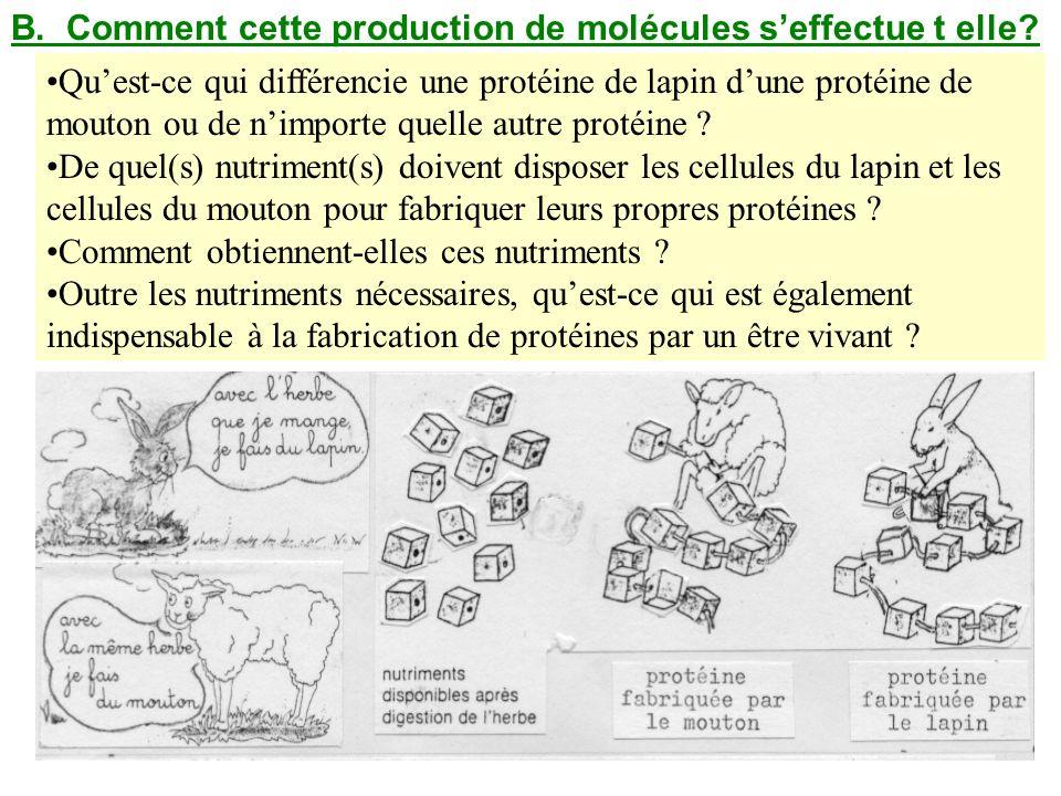 B. Comment cette production de molécules s'effectue t elle