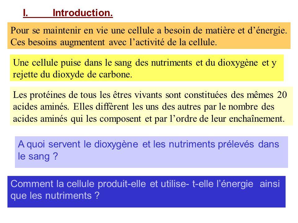 I. Introduction. Pour se maintenir en vie une cellule a besoin de matière et d'énergie. Ces besoins augmentent avec l'activité de la cellule.
