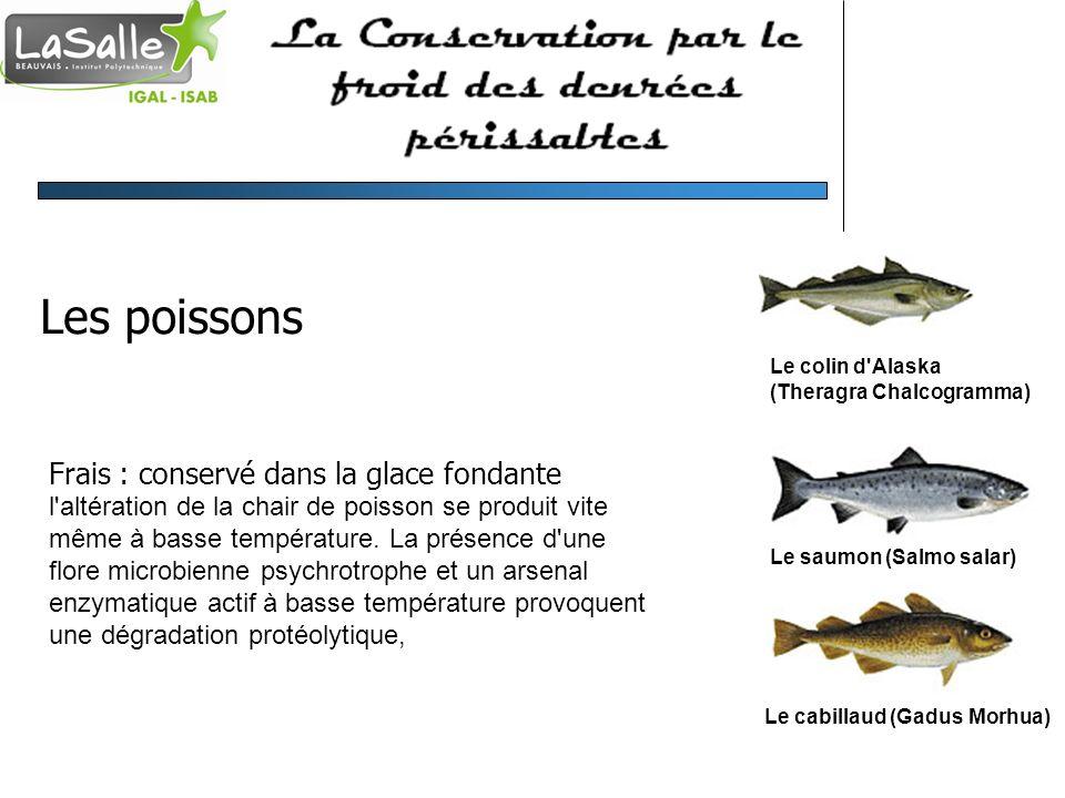 Les poissons Frais : conservé dans la glace fondante