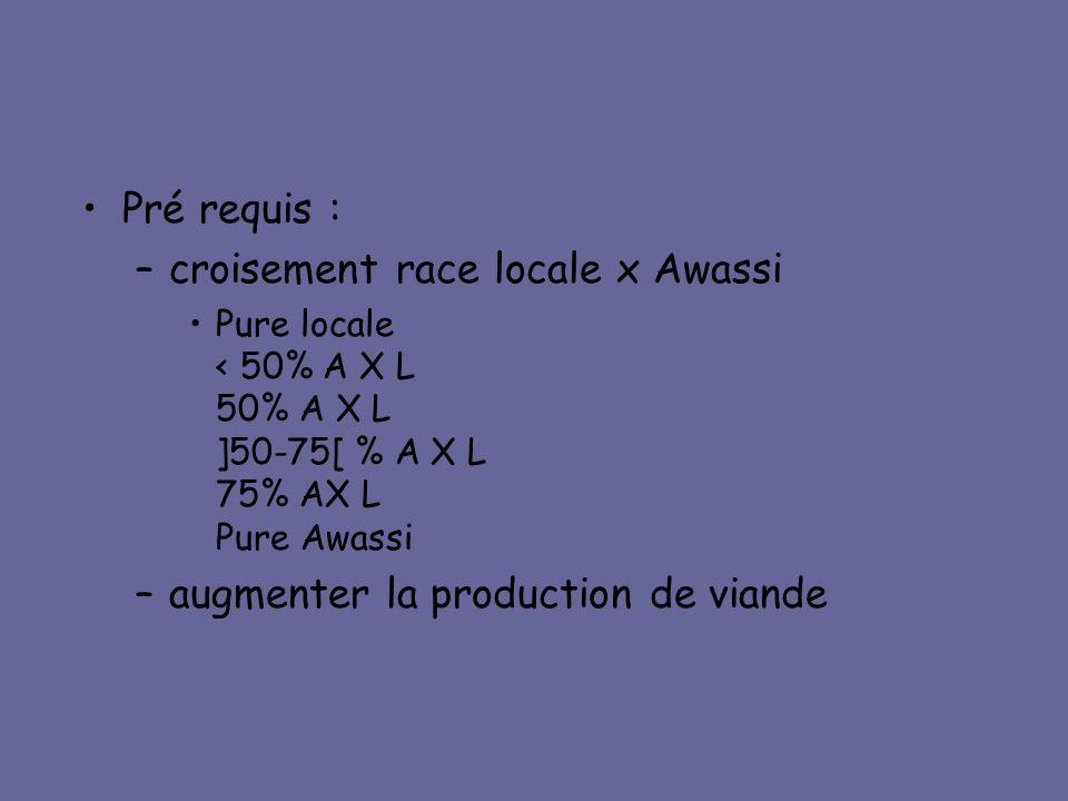 croisement race locale x Awassi
