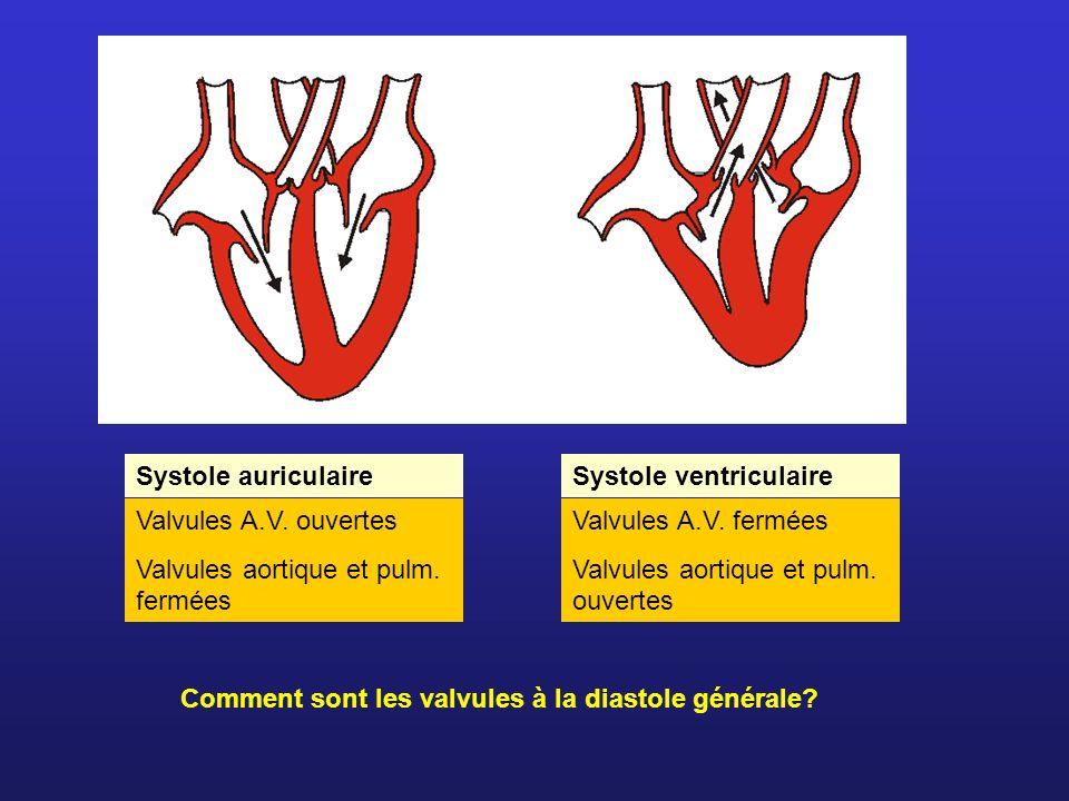 Systole auriculaireSystole ventriculaire. Valvules A.V. ouvertes. Valvules aortique et pulm. fermées.