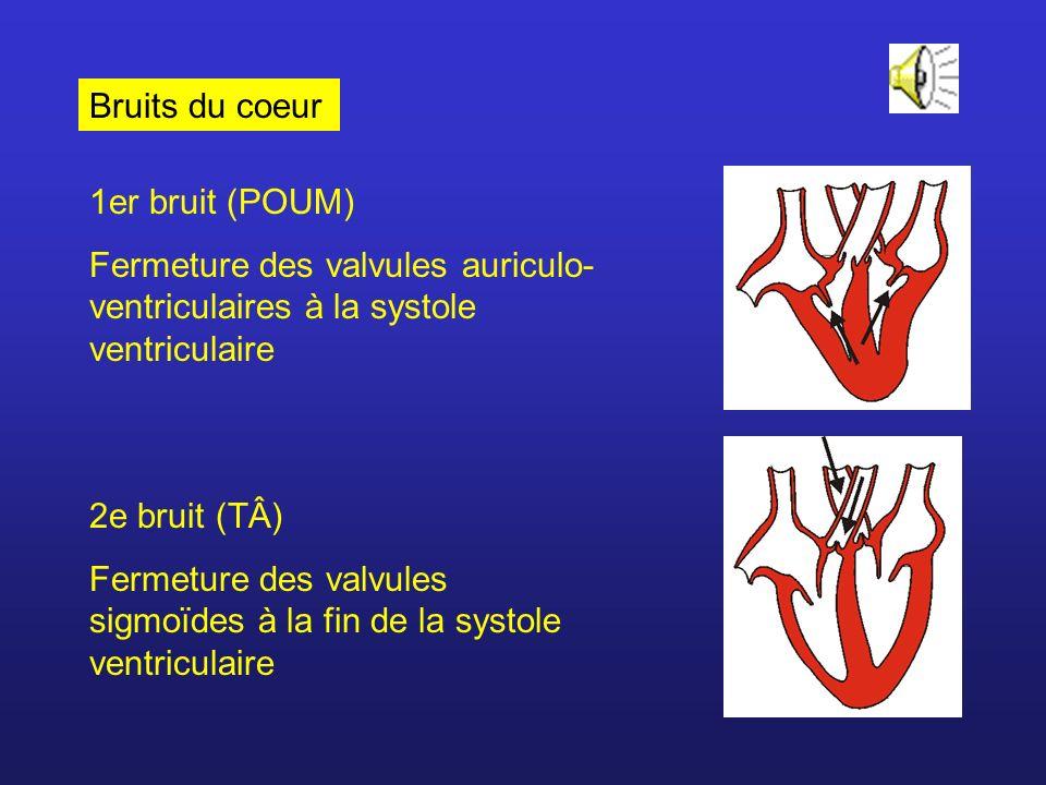 Bruits du coeur 1er bruit (POUM) Fermeture des valvules auriculo-ventriculaires à la systole ventriculaire.