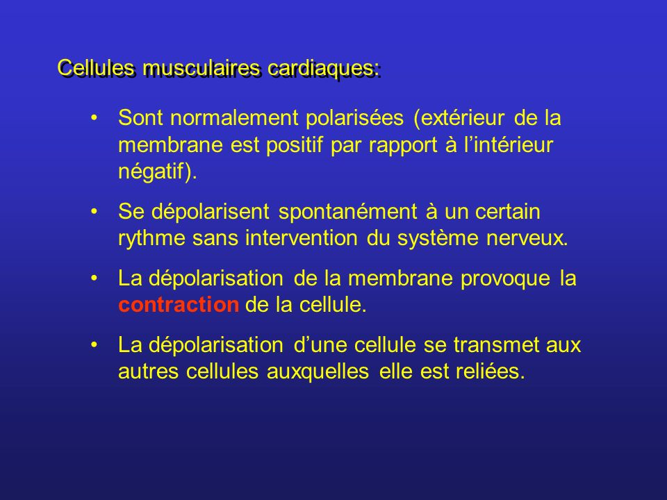 Cellules musculaires cardiaques: