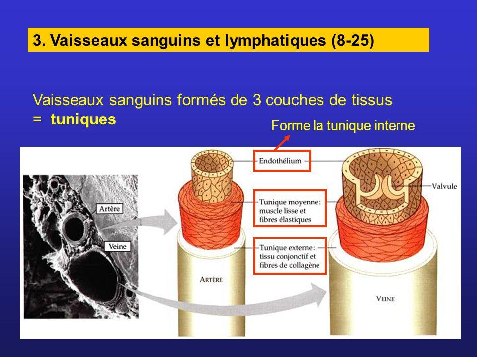 3. Vaisseaux sanguins et lymphatiques (8-25)