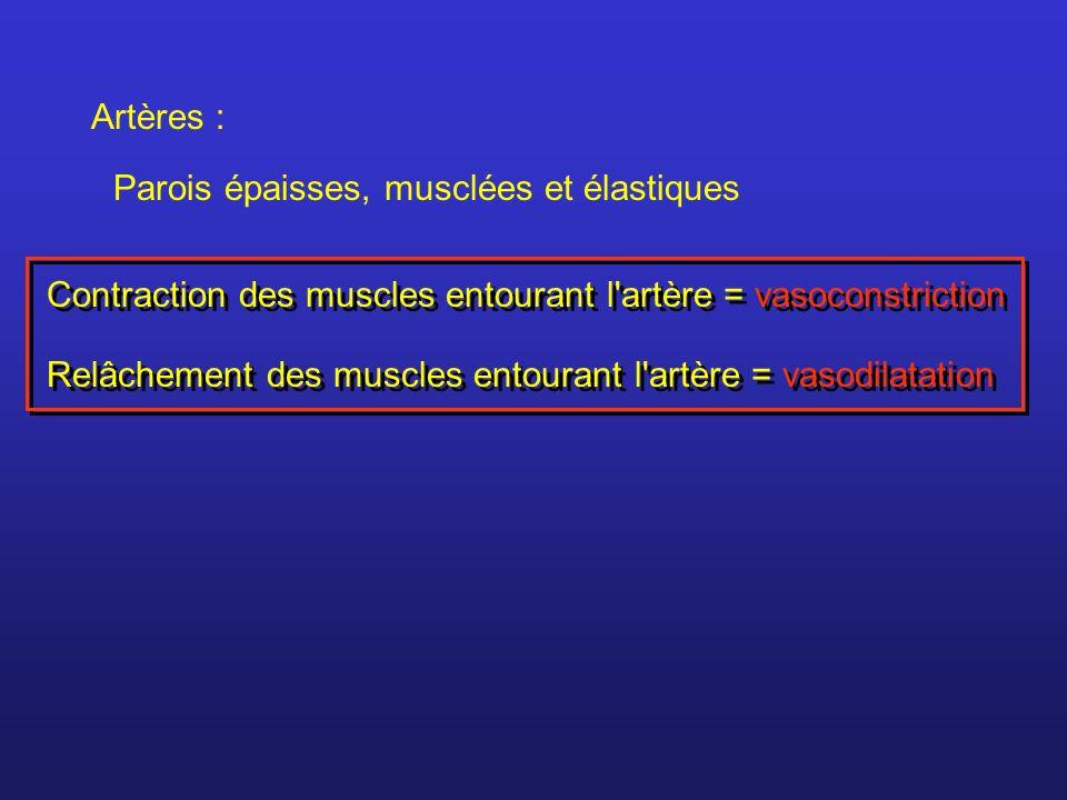 Artères :Parois épaisses, musclées et élastiques. Contraction des muscles entourant l artère = vasoconstriction.
