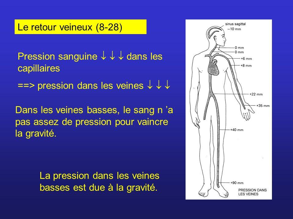 Le retour veineux (8-28) Pression sanguine    dans les capillaires. ==> pression dans les veines   