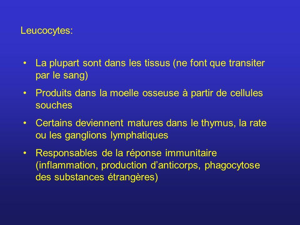 Leucocytes:La plupart sont dans les tissus (ne font que transiter par le sang) Produits dans la moelle osseuse à partir de cellules souches.