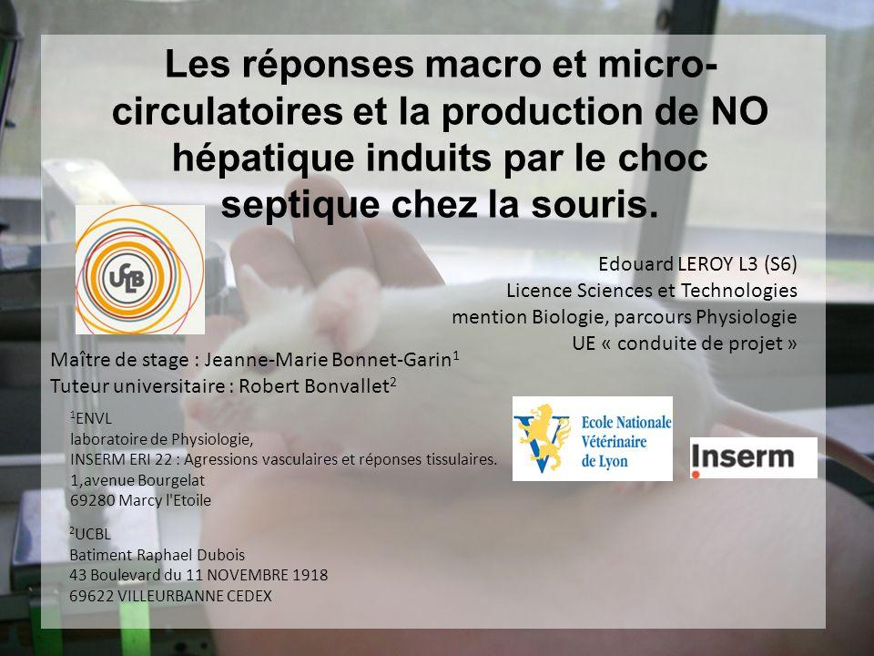 Les réponses macro et micro-circulatoires et la production de NO hépatique induits par le choc septique chez la souris.