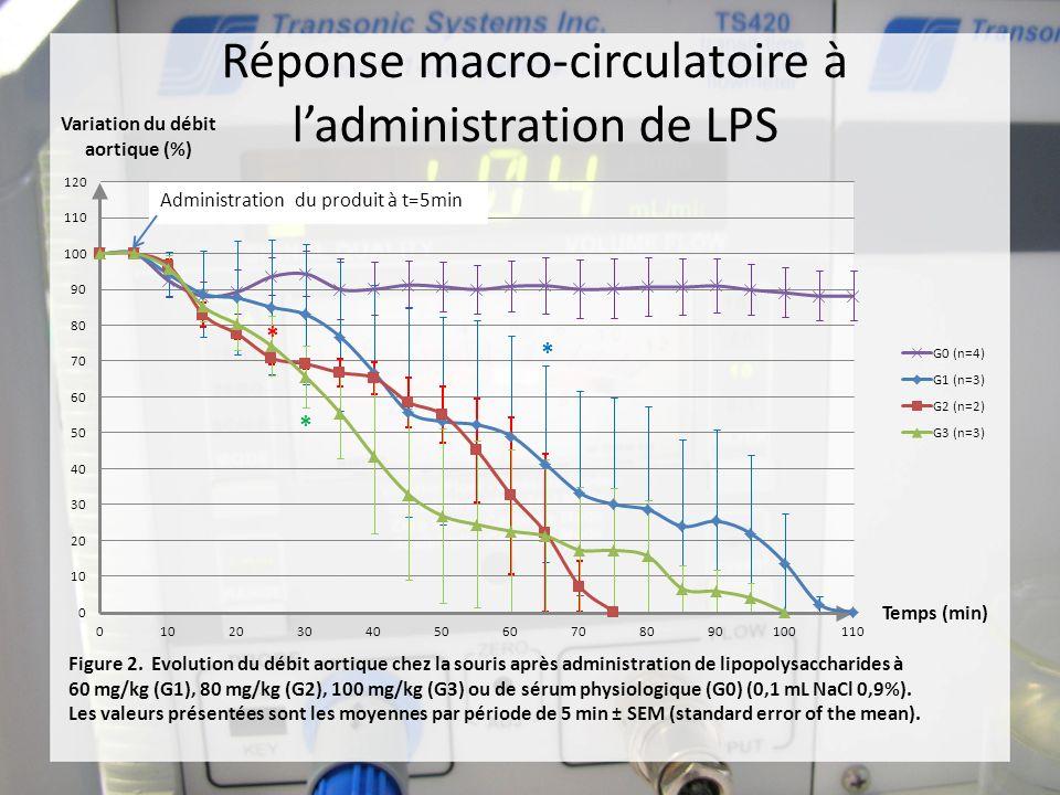 Réponse macro-circulatoire à l'administration de LPS