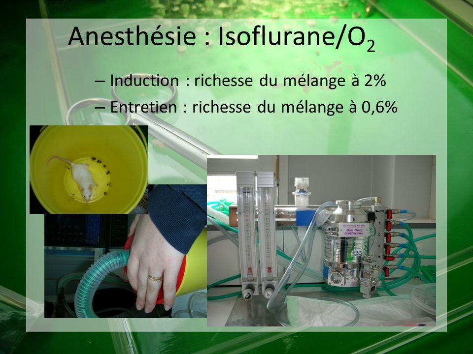 Anesthésie : Isoflurane/O2